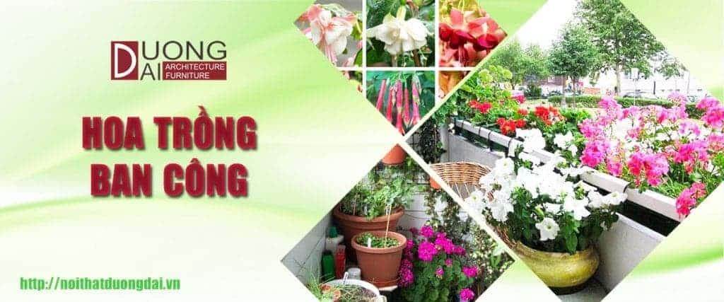 Những loài hoa trồng ban công đẹp ngây ngất khiến hàng xóm ganh tị