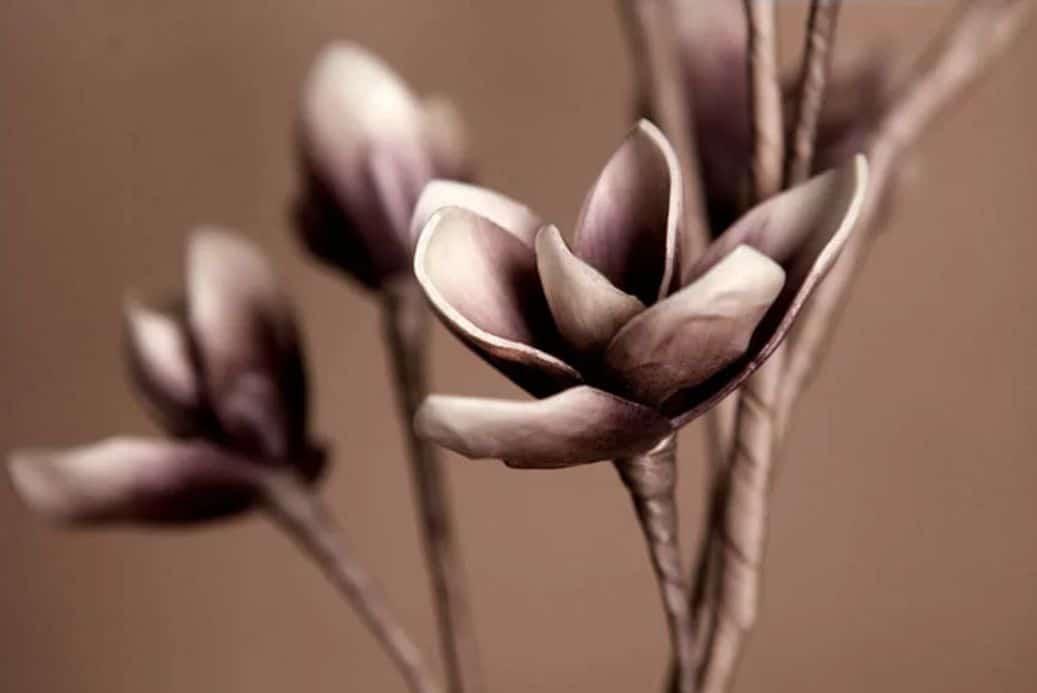 hoa mộc lan giả