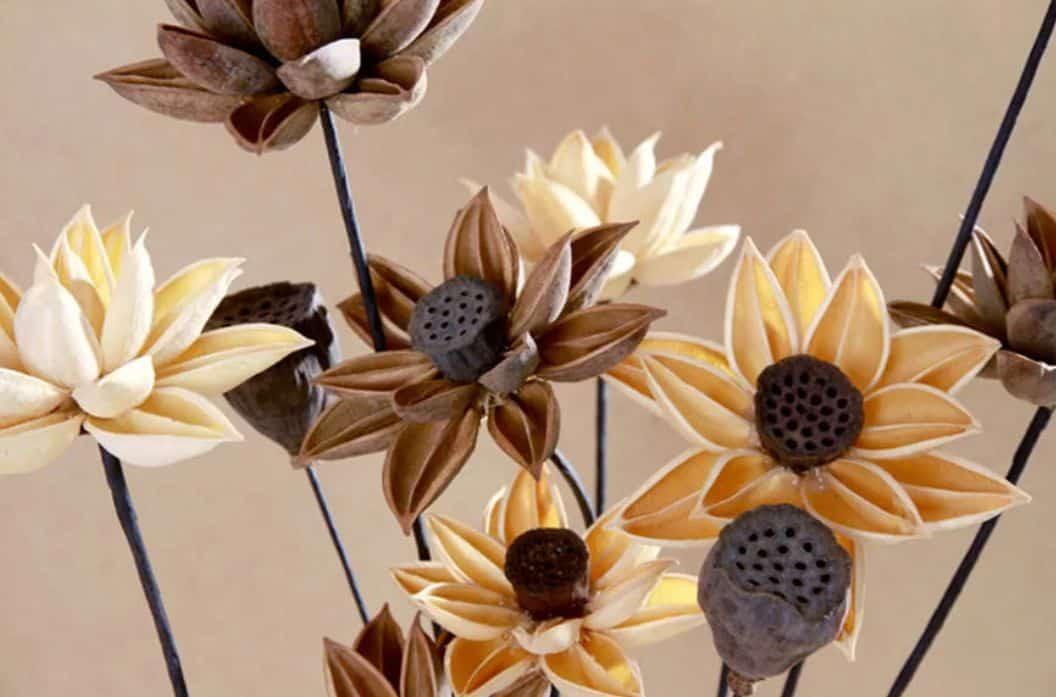 hoa sen khô