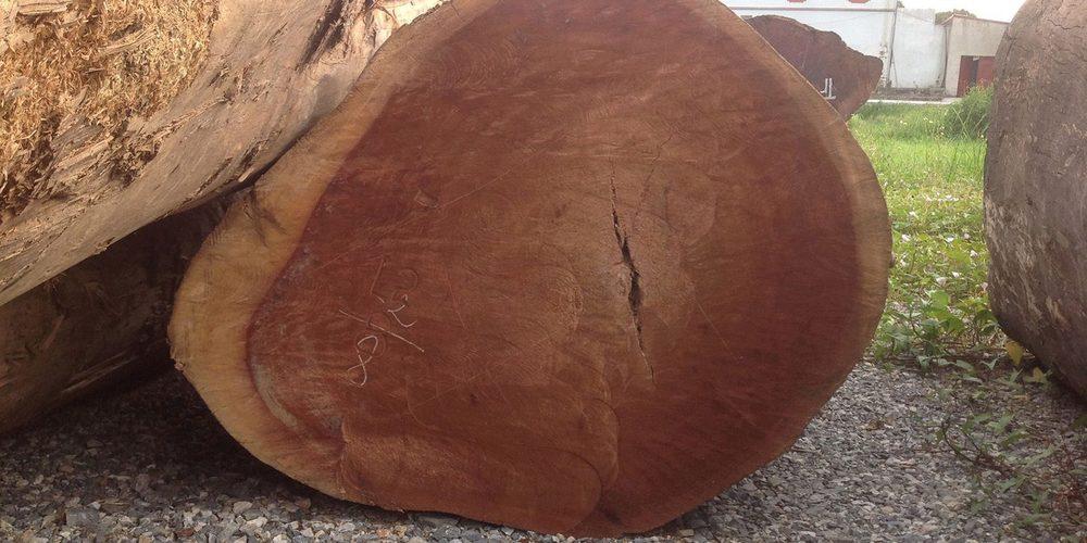 Cây gỗ phân bố chủ yếu ở vùng núi cao mưa nhiều