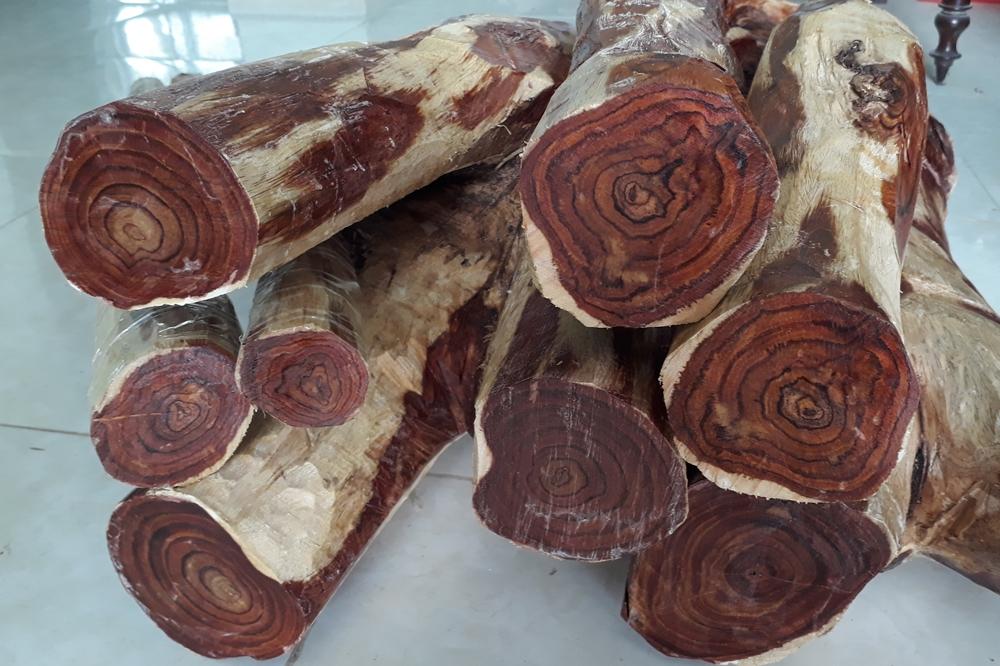 Gỗ xưa là loại cây lâu năm và cực kỳ có giá trị về mặt kinh tế