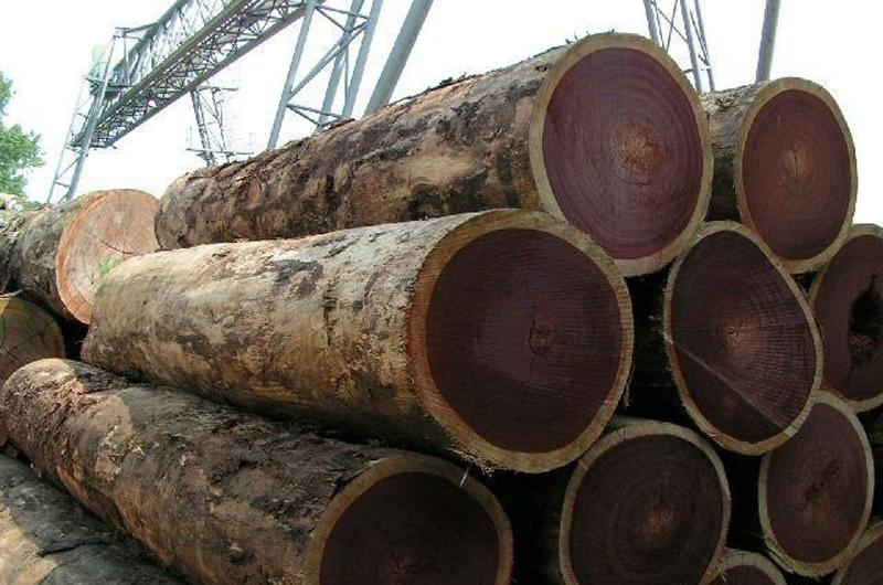 Gỗ lim là tên gọi chung của tất cả các loại gỗ như lim xanh, lim lào, lim Nam Phi