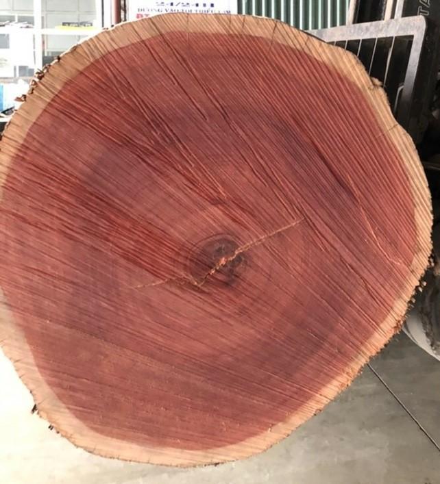 Sến đỏ là cây gỗ lớn và nó thường cao khoảng 30m