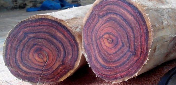 Gỗ sưa là cây gỗ có tên khoa học là Dalbergia tonkinensis prain
