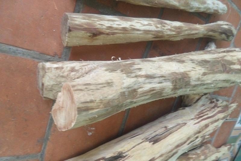 Đặc điểm của gỗ sưa trắng đó là thân vỏ nhẵn