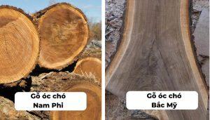 So sánh gỗ óc chó Nam Phi và Bắc Mỹ