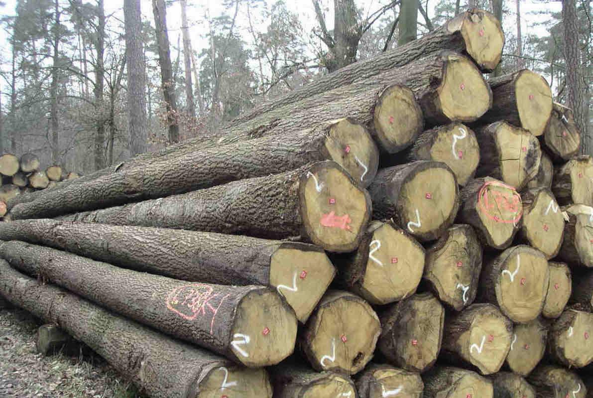 Gỗ tần bì là loại gỗ với tên tiếng Anh là ASH