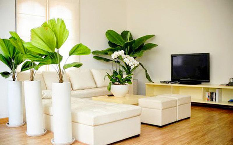 Hiện nay có rất nhiều loại cây xanh khác nhau với màu sắc và kiểu dáng khác nhau.