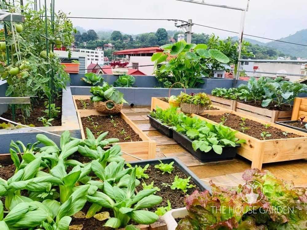 cải tạo sân thượng thành vườn