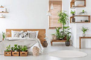 Cây trồng trong phòng ngủ nên là cây phong thủy
