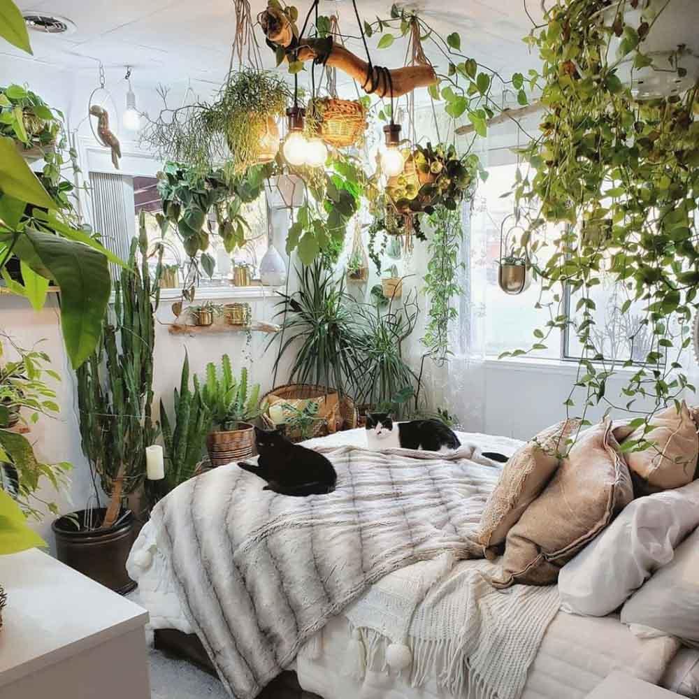 Không nên trồng quá nhiều cây trong phòng ngủ
