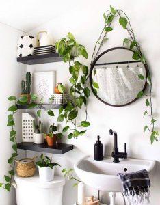 Có rất nhiều cây xanh phù hợp để thực hiện việc trang trí trong phòng tắm.