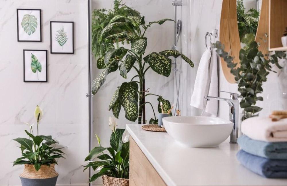 trang trí phòng tắm với cây xanh