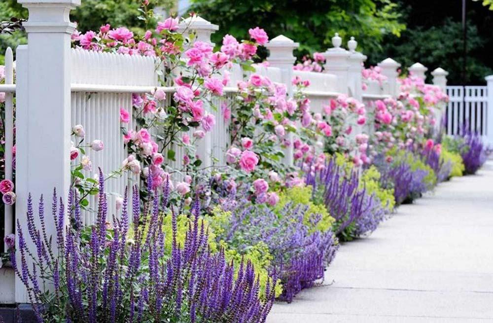 Có thể khéo léo trồng những bụi hoa ở hàng rào trước nhà