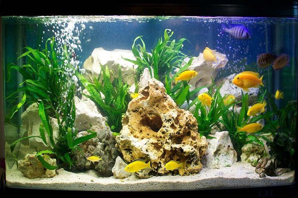 Một bể cá sẽ hội tụ đầy đủ 5 yếu tố ngũ hành bao gồm Kim, Mộc, Thủy, Hỏa, Thổ